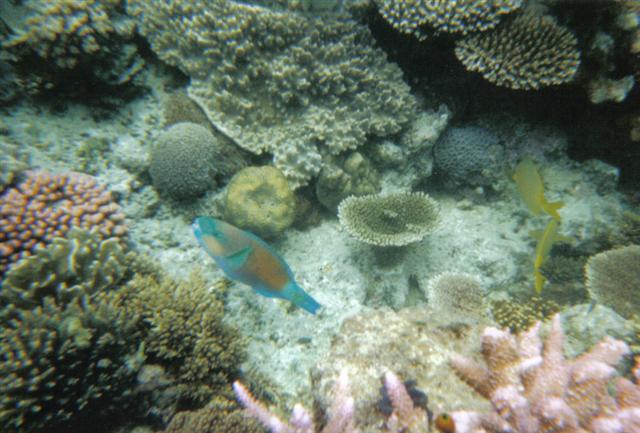 Great Barrier Reef Marine Life 2 (Small).jpg